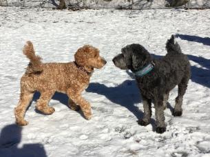 Bailey och Siri