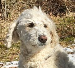 """Charlie hittade en plätt med snö i skogen och gick """"all in"""""""