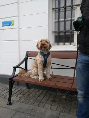 Bosse, sitter så självklart på bänken.