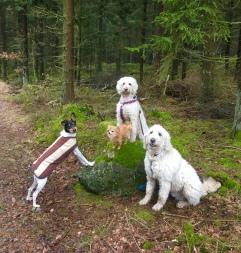 Goda vänner i skogen