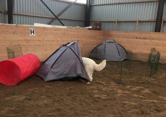 Här är hon! Charlie hittade figgen i tältet