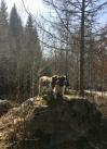 Sötnosarna Hjördis och Svea