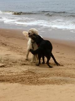 Strandens finaste pinne!