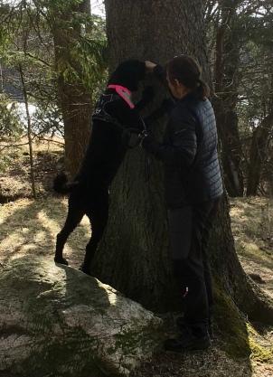 Lakrits sätter tassar på trädet
