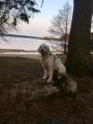 Charlie poserar framför sjön