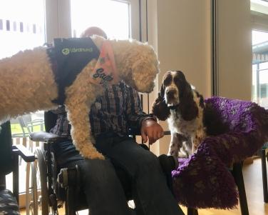 Saga och Svea, båda sociala tjänstehundar som träffat seniorer på Harplinge äldreboende. Kul att jobba med kollega för både hundar och förare!