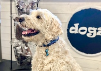 Vi besökte Dogz (länk i länklistan) och köpte ett väldigt vackert halsband i present till Charlie som fyller 5 år idag.