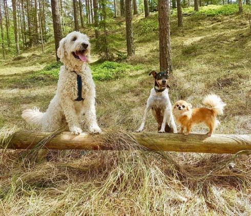 Goa vänner i skogen. Charlie, Pedro och Putte