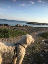 Efter mötet gick Charlie och jag en skön kvällspromenad.