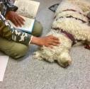 Så här kan det se ut när någon läser för hunden
