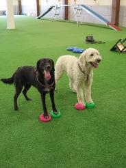 Snyggingarna Sienna och Charlie tränar tillsammans