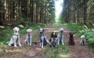 Mitzy, Svante, Lotta, Hjördis, Charlie, Nemo och Molly, alla arbetande hundar