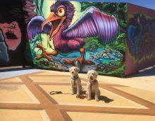 Vill fågeln ha de små vovvarna svante och Saga till middag?!?