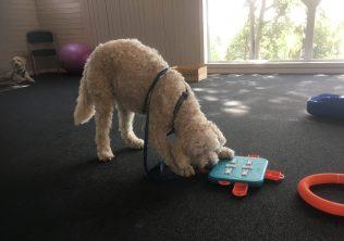 Charlie löser aktivitetsspel