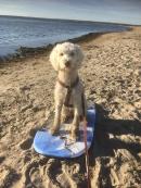 Saga på g.... jättekul att prova på wakeboard, YEAH!!! Sommarkurs de luxe med Dogs- by Marie of Sweden