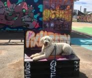 Charlie bland graffiti och annat spännande