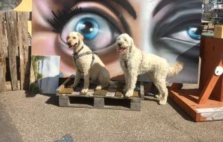 Vårdhundarna Torsten och Charlie på Pixlapiren