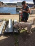 Charlie hittar doftgömman med eucalyptus och jag jublar