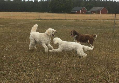 Hundarna busade, och det blev senare bad i bäcken.