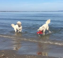 Fabbe och Charlie är helbröder och brukar träffas någon gång om året.