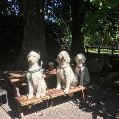 Mitzy, Charlie och Saga i Café Lugnets lummiga trädgård, där fanns både gott om skugga och sol