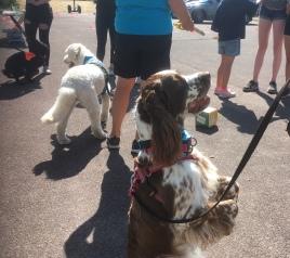 Terapihunden Hjördis sitter vackert, tärningen är kastad för Läshunden Mitzy och bakom gör Pedagoghunden Molly just en snurr