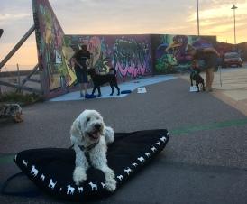 Stationsträning med roliga utmaningar på sommarkursen för Dog - Marie of Sweden