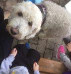barn och hund ser ut att trivas ihop <3