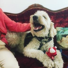 Vårdhunden Charlie, visar sitt gosedjur för en vän och får lite kli bakom örat