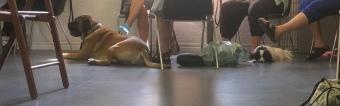 Många olika raser var på hundkafét idag