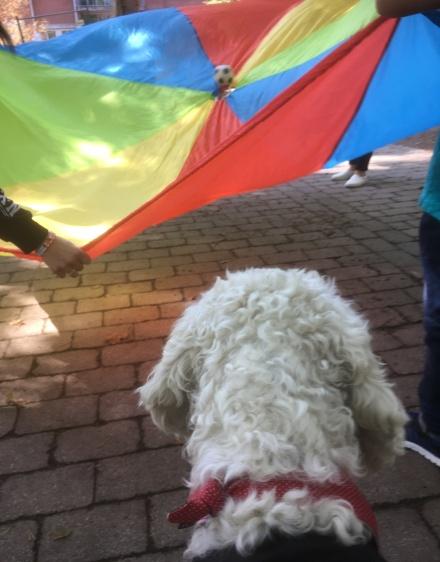 """""""fallskärmen"""" är kul och alla kan vara med. Det går ut på att hunden ska få sin boll."""