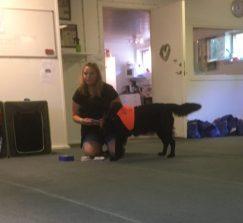Mia berättar och visar hur hon ibland gör spelplaner för eleven som sedan spelas tillsammans med hunden och uppgifter görs roliga och spännande