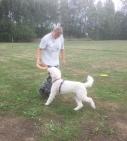 Saga får testa Dogsfrisbee. Ancilla låter alla hundarna prova