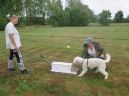 Saga testar Flyball. Hunden ska trampa på pedalen och då kastas bollen ut till hunden.