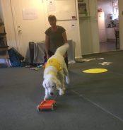 En liten vagn som kan dras av hunden för grejer och meddelandet t:ex: