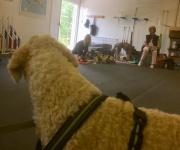 Läshunden Mitzy kikar över till kollegorna Lotta och Esther