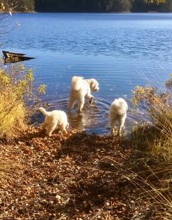 Här visar Charlie och Saga Dacke sjön för första gången.
