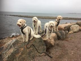 Vårdhundarna Svante, Charlie, Saga och Torsten