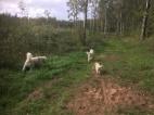 Charlie, Saga och Dacke i skogen