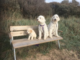 I strandskogen på bänken. Dacke, Saga och Charlie. Dacke är vår nya granne.