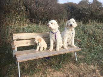 I strandskogen på bänken. Dacke, Saga och Charlie