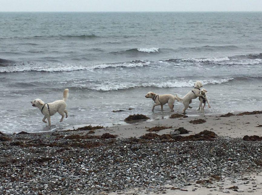 Charlie och Torsten njuter i vinden medans ungdomarna brottas.