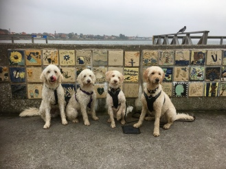 Hundarna Charlie, Saga, Svante och Torsten poserar framför en vacker kakelmur vid havet i Höganäs