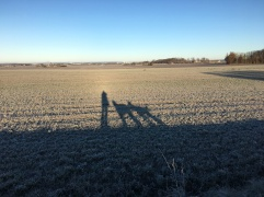 Långa skuggor idag på vår morgonpromenad.