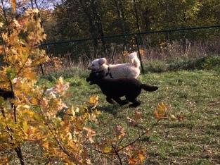 Buddy och Malte i full fart