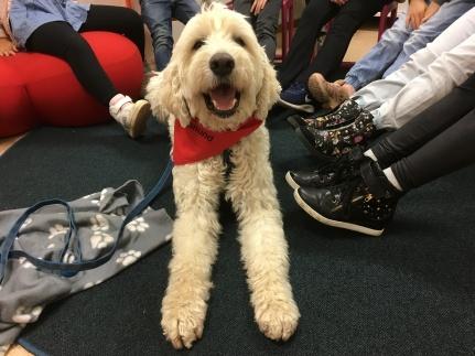 """Läshunden med besökare runt sig som ville känna igen sina dojor sen """"här"""""""