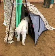 Hittade! Saga fann folk gömda i det lilla tältet.