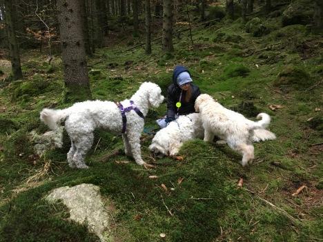 En tur i skogen blev det också med gulliga valpen Dacke. Vi hittade en del svamp också.