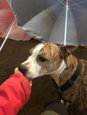 Attis hittade mig bakom parasollerna längst ner i ena hörnan i det stora ridhuset. Då bjuds det leverpastej