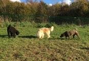 Buddy, Pyret och Whiskey sniffar efter köttbullebitar